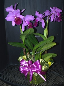 Cattleya, foiled & bowed