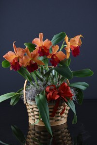 Cattleya basket-$50 and up